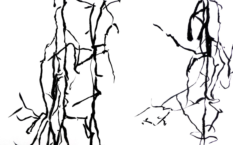 Beeld van Carien Engelhard, Hangende takken, boswandeling, Inkt op papier
